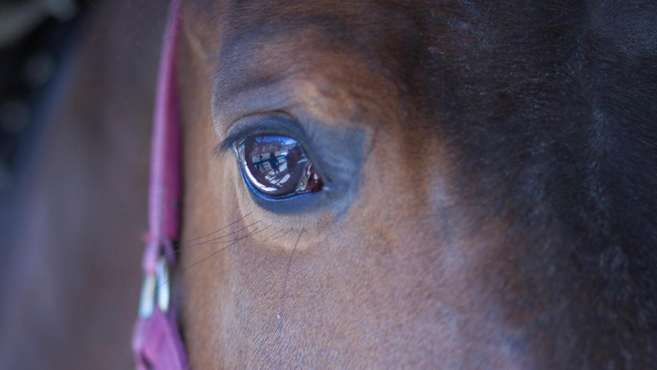 tutto per la cura del tuo cavallo